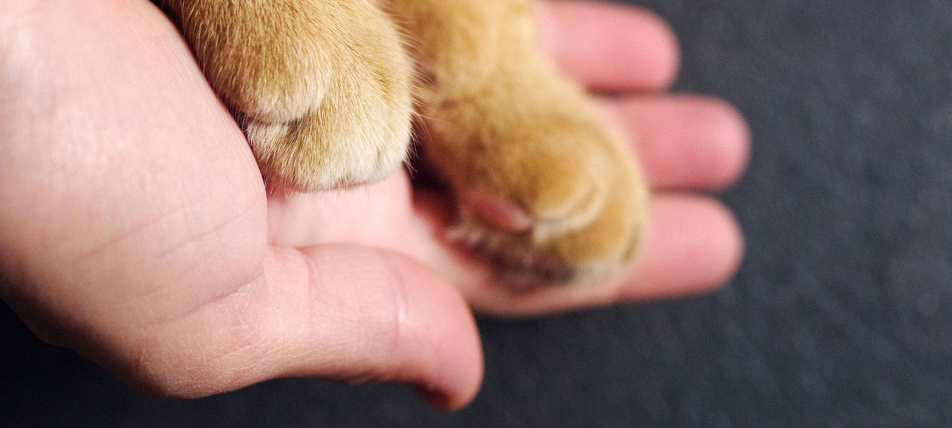 Karsten-Hajok_Versicherungen_Tierversicherung
